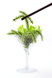 Using chopsticks with Oval sea grapes seaweed in cocktail glass. Royalty Free Stock Images