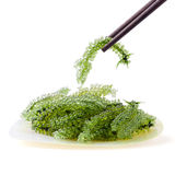 Using chopsticks with Oval sea grapes seaweed, Healthy sea food Stock Photos
