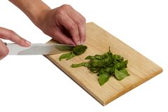Using kitchen knife to cut Basil Royalty Free Stock Photos
