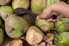Using Knife to Chopped Coconut for Cooking. Royalty Free Stock Photography