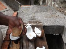 Using a knife to extract coconut meat. Removing the edible coconut from a hard shell in the tropics stock video