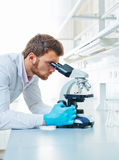 Using microscope. Male scientific researcher using microscope in the laboratory Royalty Free Stock Photo