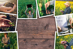 Using modern technology in agriculture, photo collage Royalty Free Stock Images