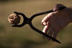 Using nutcracker. Woman hand cracking a walnut Stock Photos