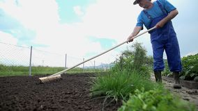 Using the rake to evenly distribute around the plowed garden soil stock footage