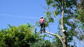 Using safety ropes to stand on a tree branch
