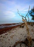 łuska drzewa Zdjęcia Stock