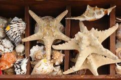 łuska rozgwiazdy Fotografia Stock