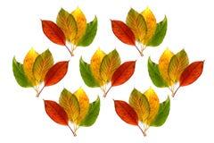Uso colorido das folhas de outono para o fundo foto de stock