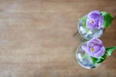 Uso criativo de duas tulipas violetas do foco imagem de stock