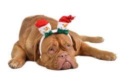 Uso del cane headwewar con i pupazzi di neve divertenti Immagine Stock Libera da Diritti