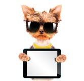 Uso del cane tonalità con il pc della compressa Immagini Stock