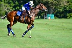 Uso del jugador de polo del caballo una bola del golpe del mazo Fotos de archivo libres de regalías