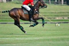 Uso del jugador de polo del caballo una bola del golpe del mazo Imagen de archivo libre de regalías