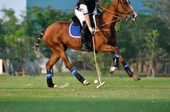 Uso del jugador de polo del caballo una bola del golpe del mazo Fotos de archivo