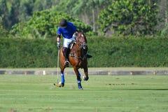 Uso del jugador de polo del caballo una bola del golpe del mazo Fotografía de archivo libre de regalías