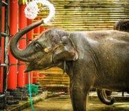 uso dell'elefante del bambino la sua acqua della spruzzata del tronco durante il bagno allo zoo Fotografie Stock