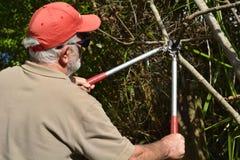 Uso do homem uma tesoura de podar manual da árvore imagens de stock royalty free