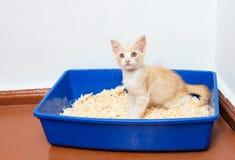 Uso joven del gato el retrete foto de archivo