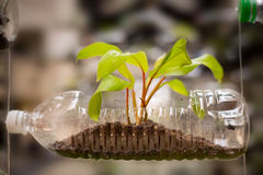 Uso plástico vacío de la botella como envase para crecer la planta, recyc foto de archivo