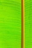 Uso verde della foglia per fondo immagini stock
