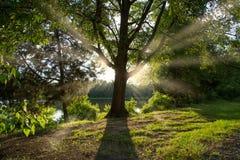 Uspokajać światło słoneczne za drzewem Zdjęcia Stock