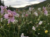 Uspokajać kwiaty Utah zdjęcia stock