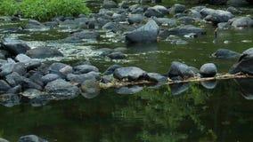 Uspokajać strumyka spływanie (1 4) zdjęcie wideo