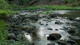 Uspokajać strumyka spływanie (3 4) zbiory wideo