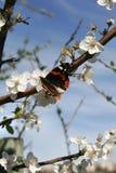 uspokaja pogodną dzień wiosna Fotografia Royalty Free