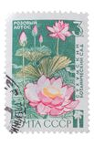 USSR - CIRCA 1966: En stämpel skrivev ut i shower rosa lotusblomma, cir Royaltyfria Foton