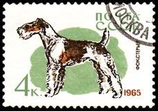 USSR - CIRCA 1965: portostämpeln som skrivs ut i USSR, visar en foxterrierhund, serie jakt och servicehundkapplöpning Arkivbild