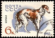 USSR - CIRCA 1965: portostämpeln som skrivs ut i USSR, visar en rysk vinthundhund, serie jakt och servicehundkapplöpning Fotografering för Bildbyråer