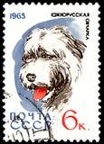 USSR - CIRCA 1965: portostämpeln som skrivs ut i USSR, visar en södra rysk herde, serie jakt och servicehundkapplöpning Arkivfoto