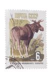 USSR - CIRCA 1964: A post stamp printed in , shows elk, devo Royalty Free Stock Photography