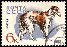 USSR - CIRCA 1965: postage stamp, printed in USSR, shows a borzoi dog, series Hunting and Service Dogs. USSR - CIRCA 1965: a postage stamp, printed in USSR stock image