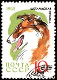 USSR - CIRCA 1965: postage stamp, printed in USSR, shows a Collie dog, series Hunting and Service Dogs. USSR - CIRCA 1965: a postage stamp, printed in USSR Royalty Free Stock Photography