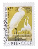 USSR - CIRCA 1968: A Stamp printed in shows image of Grea stock image