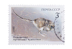 USSR - CIRCA 1985: A Stamp printed in  shows image of  pygm Royalty Free Stock Photo