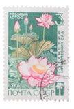 USSR - CIRCA 1966: A Stamp printed in  shows pink lotus, cir Stock Photos