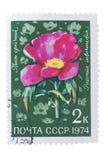 USSR - OKOŁO 1974: Znaczek drukujący w, przedstawienie flor li Obraz Stock