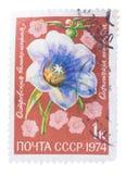 USSR - OKOŁO 1974: Znaczek drukujący w, przedstawienie flor li Obrazy Royalty Free