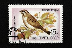 The USSR postage stamp, series - Songbirds, 1981 royalty free stock image