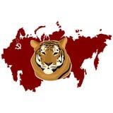 Ussurian tiger Arkivfoton
