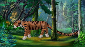 Ussurian Tiger Walks Through the Taiga. Cartoon Ussurian Siberian Tiger Walks Through the Taiga in a Summer Day. Handmade animation,  motion graphic stock video