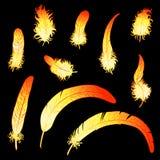 Ustaleni ogniści piórka kogut lub feniks Zdjęcia Royalty Free