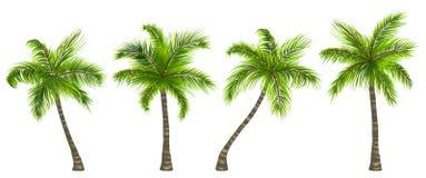 Ustaleni Realistyczni drzewka palmowe Odizolowywający na Białym tle ilustracja wektor