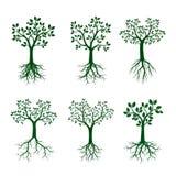 Ustaleni Zieleni drzewa z korzeniami również zwrócić corel ilustracji wektora royalty ilustracja