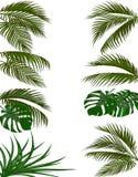 Ustaleni zieleni liście tropikalni drzewka palmowe Monstera, agawa pojedynczy białe tło ilustracja ilustracji