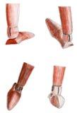 Ustalona ręka rysująca sepiowa drewniana postaci stopy ilustracja fotografia royalty free